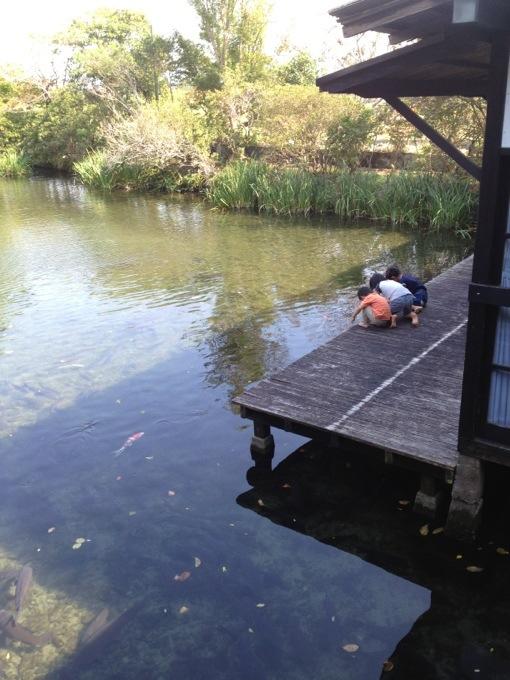 帰りはしらさぎ荘に寄ってお昼。子供たちは鯉に餌やり。